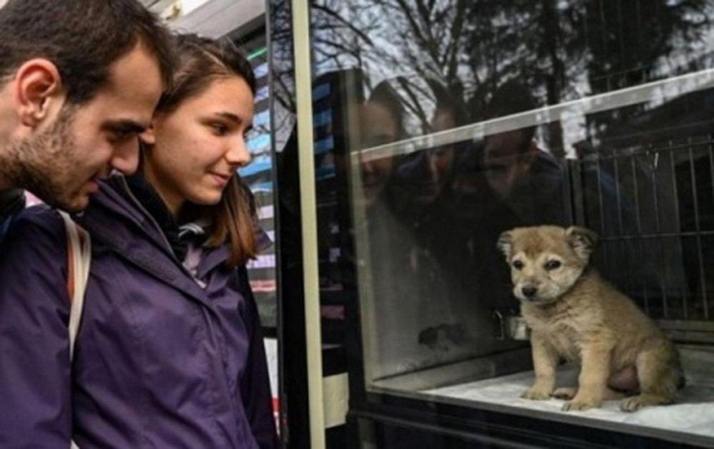 Piden prohibir la exhibición de animales en vidrieras de comercios