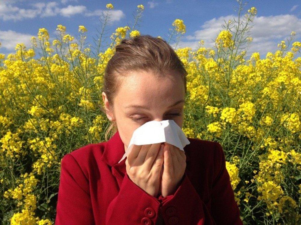 Primavera rinitis alergias